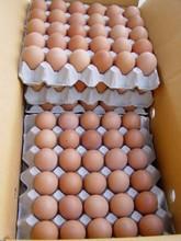 2015 huevos blancos, BROWN huevos frescos / pollo / filete