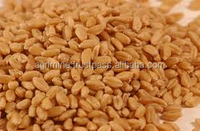 WHEAT GRAIN PRODUCERS AND SUPPLIERS