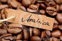 Vietnam Roasted ARABICA Coffee Bean