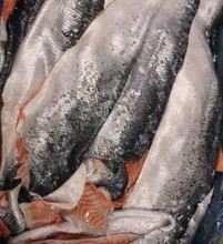 Frozen Atlantic Salmonl Fish