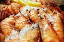 SEA FOODS AVAILABLE FRESH AND CHEAP