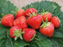 Fresh strawberries ELSANTA