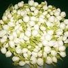 Madurai Jasmine Perfume Oil