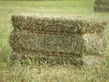 Rhode grass hay, hay for animal, dry hay bale, grass hay bale, Rhode hay bale