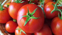 Fresh Red Farm Harvested Tomatoes