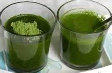Premium Wheat Grass Powder for bulk supply