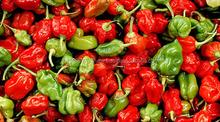 Fresh small chili/ Red Pepper