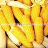 /product-tp/corn-importers-animal-feed-yellow-corn-importers-in-vietnam-50014037031.html