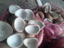 COCONUT WHITE COPRA from Indonesia grade A, NO FUNGI, CLEAN, SUPER QUALITY DRIED COCONUT FROM INDONESIA 2015