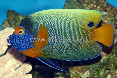 Importati acquario di pesci marini acquari o accessori id for Neon pesci prezzo