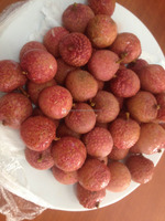 vietnam frozen lychee