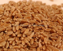 Milling wheat for human consumption