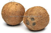 Indian high quality coconut exporters