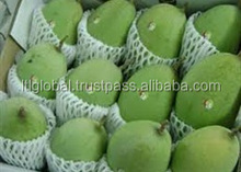BEST PRICE FOR FRESH MANGO WITH GOOD QUALITY