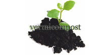 Top Quality Organic Composting