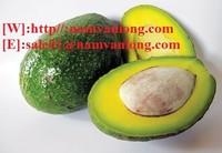 Supply Fresh Avocado Fruit
