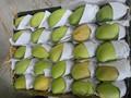 fresco del gato chu mango con frutas de alta calidad