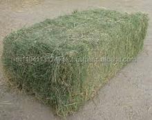 NATURAL Alfalfa(animal feed)