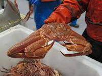 Live WHOLE KING CRAB