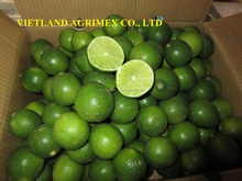 GREEN FRESH LIMES/ LEMON HIGH QUALITY FROM VIETNAM