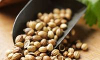 Finest Quality Organic Coriander Seeds For OEM