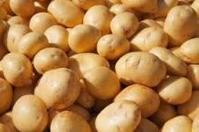 Grade A Quality Fresh potatoes for sell in Bulk quantities