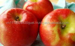 H_HOT SALE cheapest price good quality fresh apples