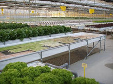 High-tech Greenhouses and Hydroponic Systems for Professional Growers