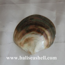 natural black mother of pearl wild polished for plate art dish