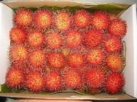 Vietnam fresh Rambutant