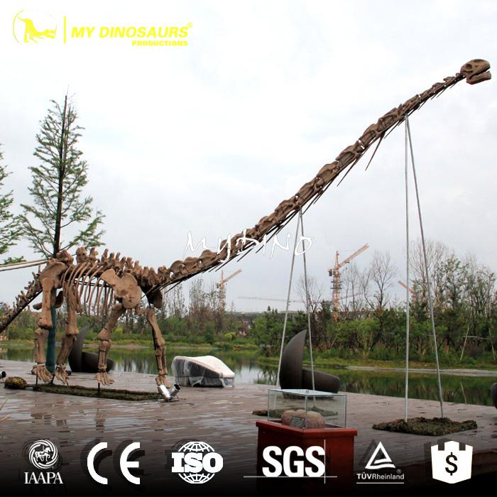 dinosaur fossil.jpg