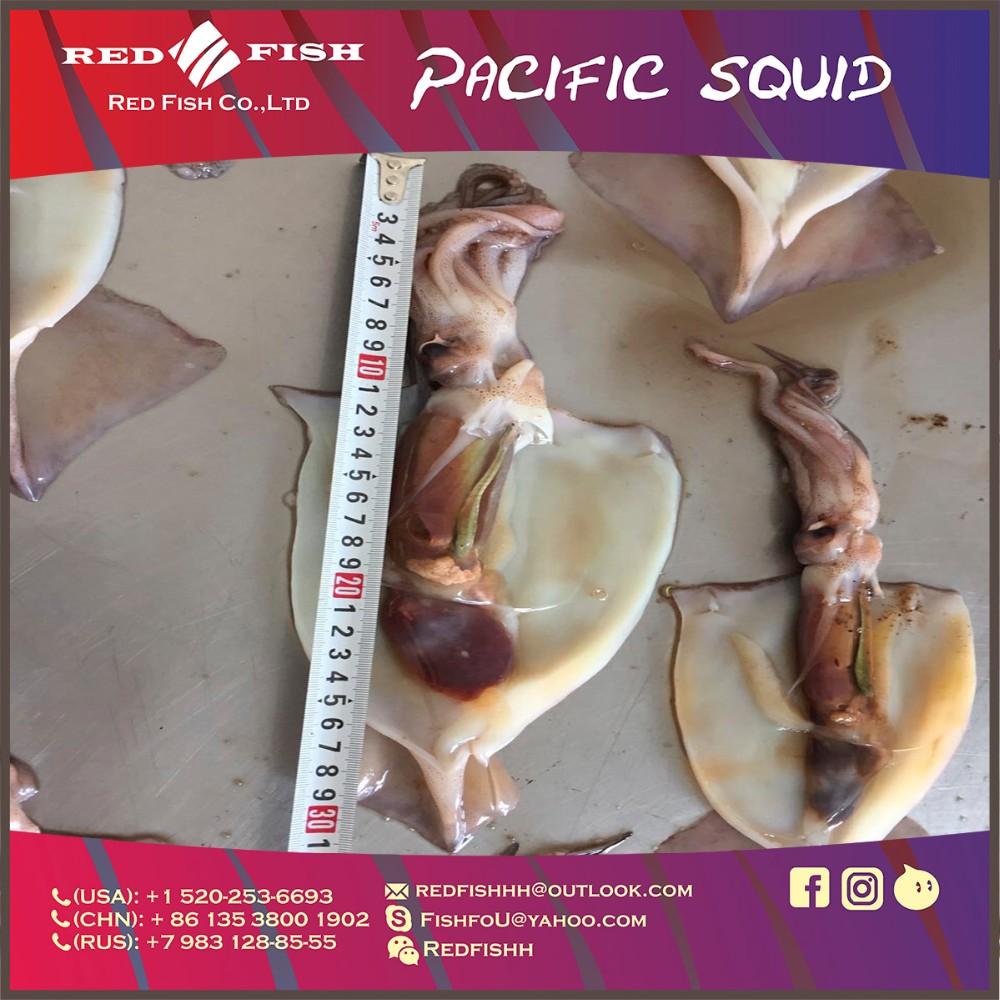 Squid frame11