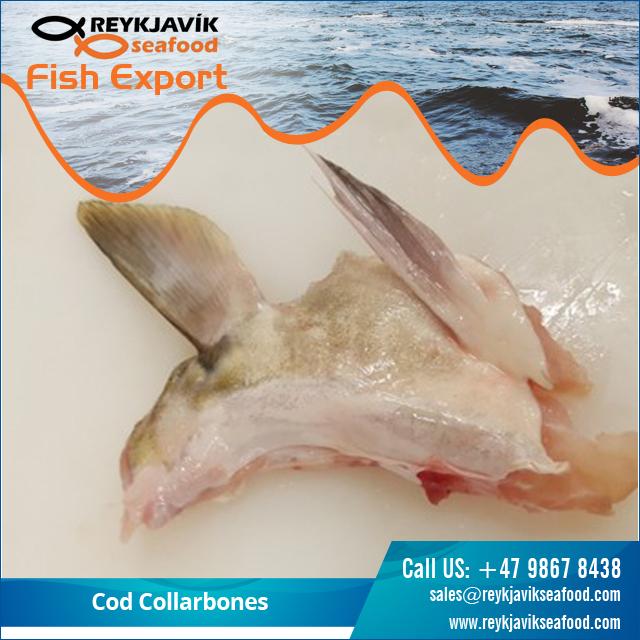 Cod Collarbones.jpg